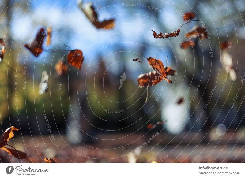 Herbstfall herbstlich Sonne Sonnenlicht Reflexion & Spiegelung Außenaufnahme Natur Garten Park fallen Jahreszeiten Unschärfe Schwache Tiefenschärfe Blatt gelb