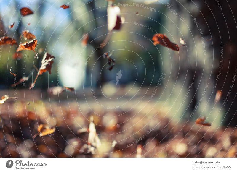 Blätterfall Herbst herbstlich Sonne Sonnenlicht Reflexion & Spiegelung Außenaufnahme Natur Garten Park fallen Jahreszeiten Unschärfe Schwache Tiefenschärfe