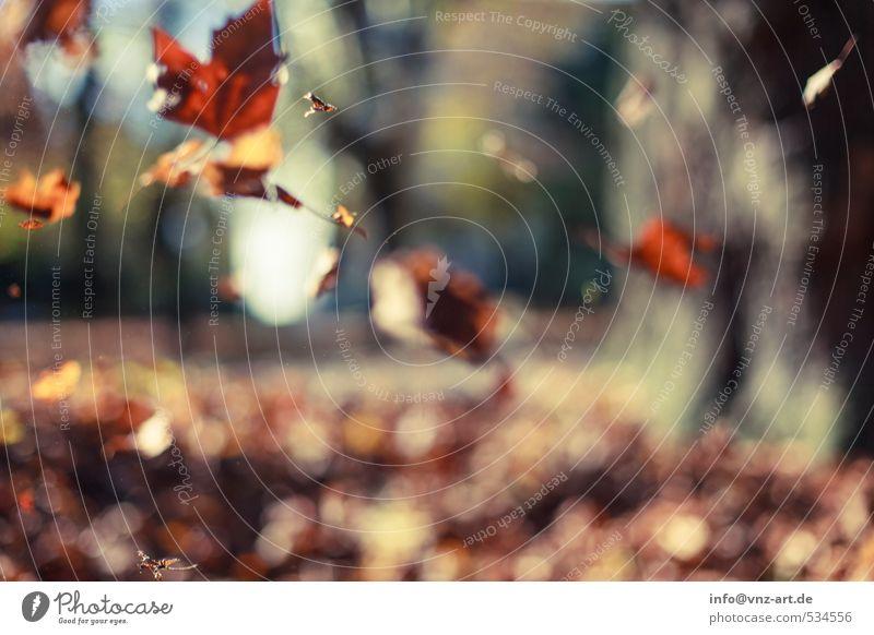 Herbstlich herbstlich Sonne Sonnenlicht Reflexion & Spiegelung Außenaufnahme Natur Garten Park fallen Jahreszeiten Unschärfe Schwache Tiefenschärfe Blatt gelb