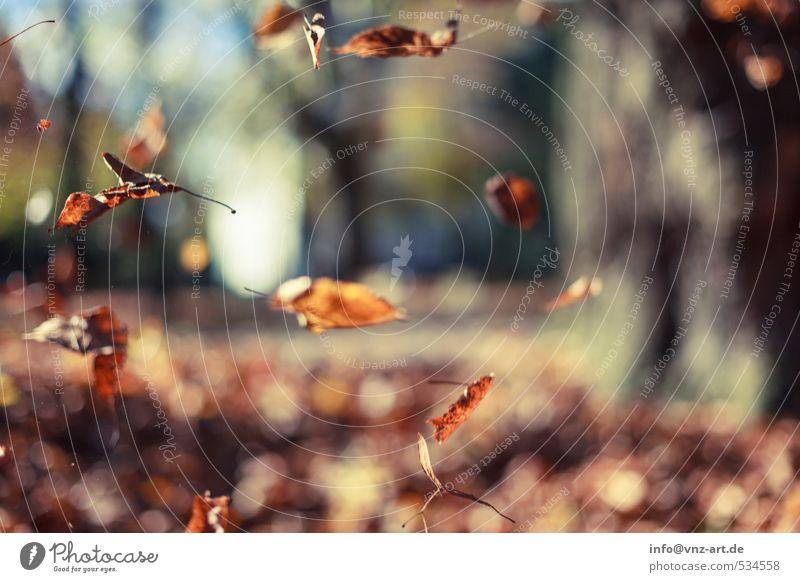 Im Herbst Natur Pflanze Baum Blatt Wald gelb Umwelt Garten fliegen Park orange Feld gold Jahreszeiten Schweben