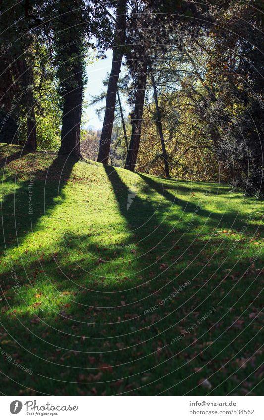 Sssschatten Natur grün Pflanze Sonne Baum Landschaft Blume Wald Umwelt Wiese Herbst Gras Garten Wetter Park Klima