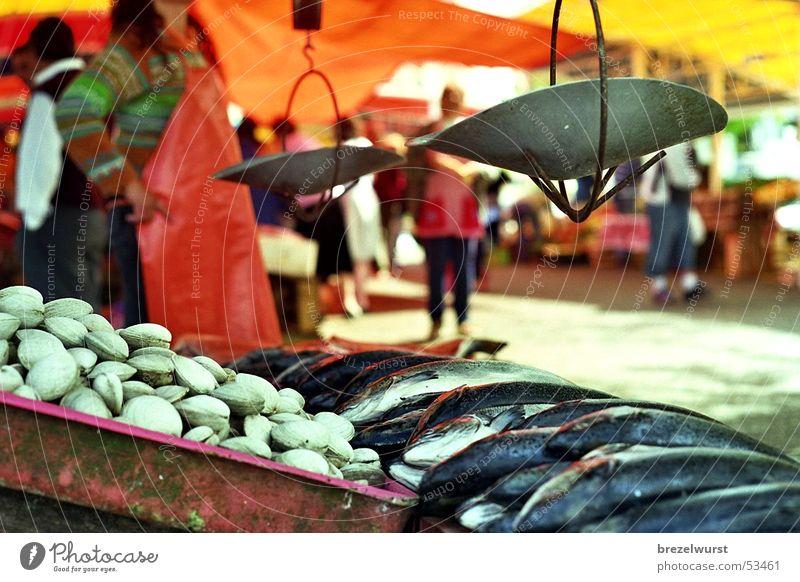 Fischmarkt Sonne rot Sommer hell orange frisch Händler stehen Lebensmittel Markt Kiste Waage Arbeitsbekleidung Meeresfrüchte wiegen