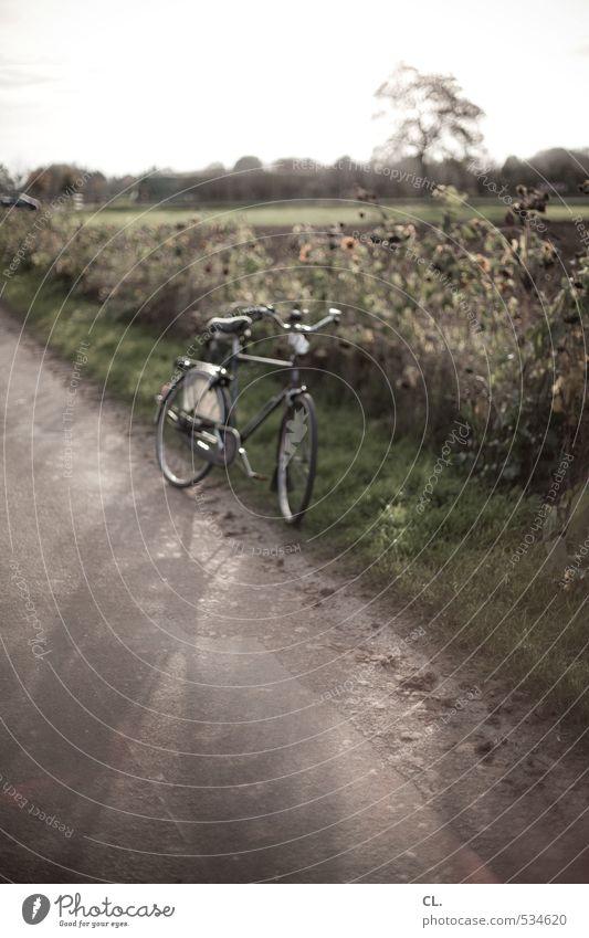 wer rastet der rostet Natur Sommer Landschaft ruhig Umwelt Straße Wiese Herbst Gras Wege & Pfade Freizeit & Hobby Feld Verkehr Fahrrad Sträucher Schönes Wetter