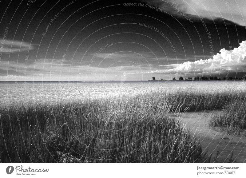 Der schönste Strand der USA 2005 Wolken Florida Fort de Soto Park Meer dramatisch rau Außenaufnahme Wellen Gras St. Petersburg Himmel Schwarzweißfoto frei
