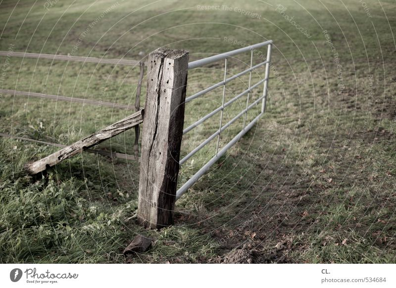 landflucht Natur grün Landschaft Umwelt Wiese Gras braun Feld offen Erde Zaun Grenze Tor Pferch Viehweide Zaunpfahl
