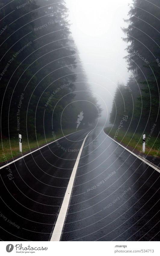 Down Ausflug Umwelt Natur Landschaft Herbst Klima schlechtes Wetter Nebel Baum Nadelbaum Verkehr Verkehrswege Straßenverkehr Linie fahren dunkel Ferne gruselig