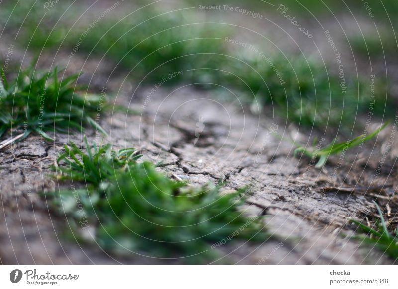 soil Gras dreckig Erde Bodenbelag trocken Riss