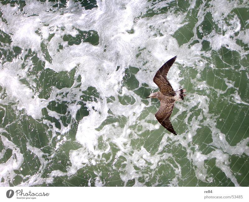 Winds of Change Möwe Vogel Meer Niederlande Wellen Tier Muster grün weiß schwarz braun Nordsee fliegen Wasser Kraft Kontrast Detailaufnahme Feder Helgoland