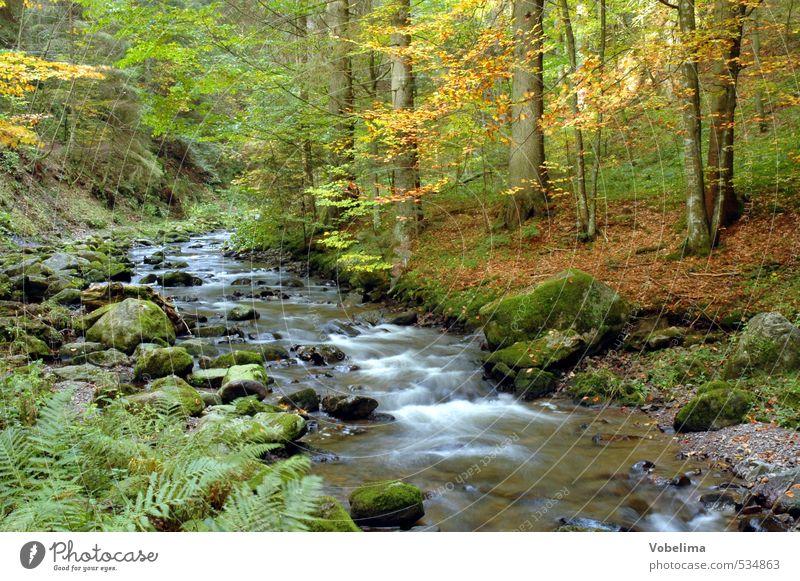 Ravenna-Schlucht im Höllental, Schwarzwald, D. Umwelt Natur Landschaft Wasser Herbst Baum Wald Bach blau braun mehrfarbig gelb gold grün orange weiß ravenna
