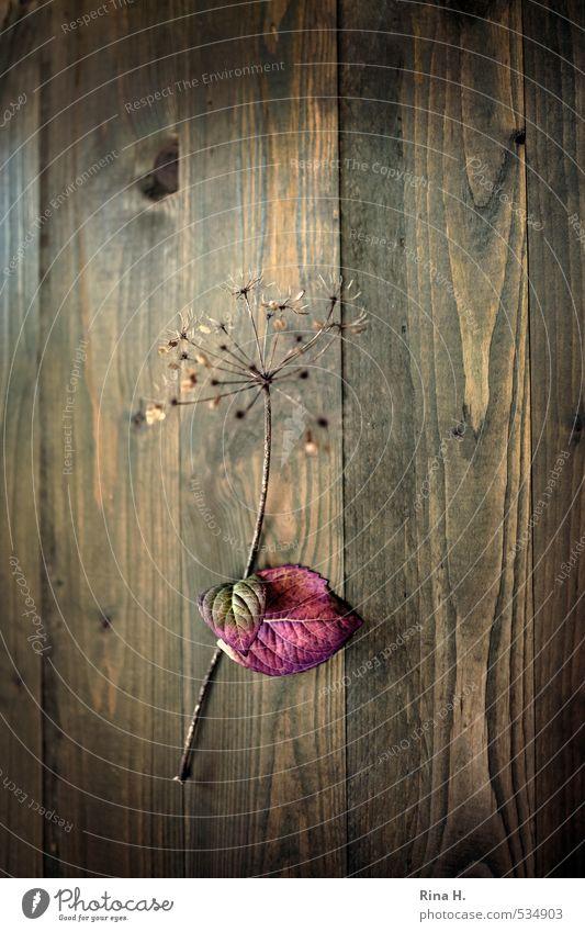 HerbstStill Blatt natürlich Kunst Wandel & Veränderung Vergänglichkeit hängen Holzwand