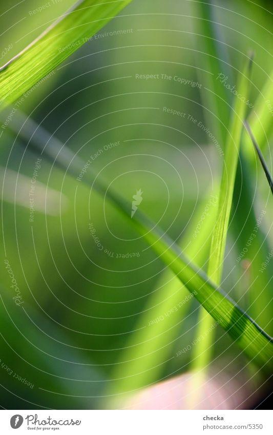 Gras grün Sommer Wiese Gras Frühling Gesundheit frisch Halm