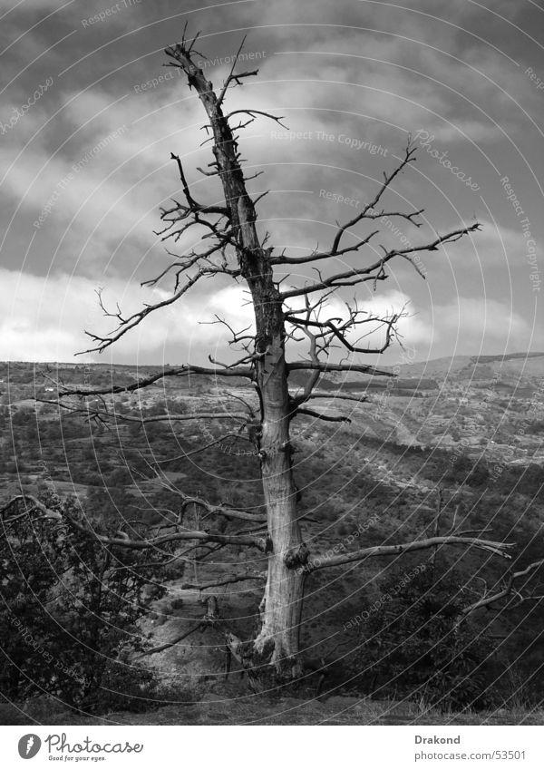 Drought Natur Granada Alpujarras Bubión