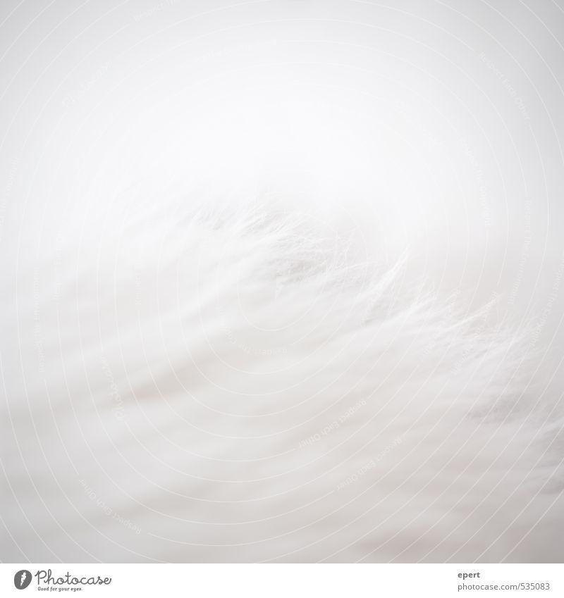 Eisbär vor Eisberg Fell Haare & Frisuren weißhaarig Teppich ästhetisch einfach einzigartig weich grau Perspektive rein Farbfoto Gedeckte Farben Innenaufnahme
