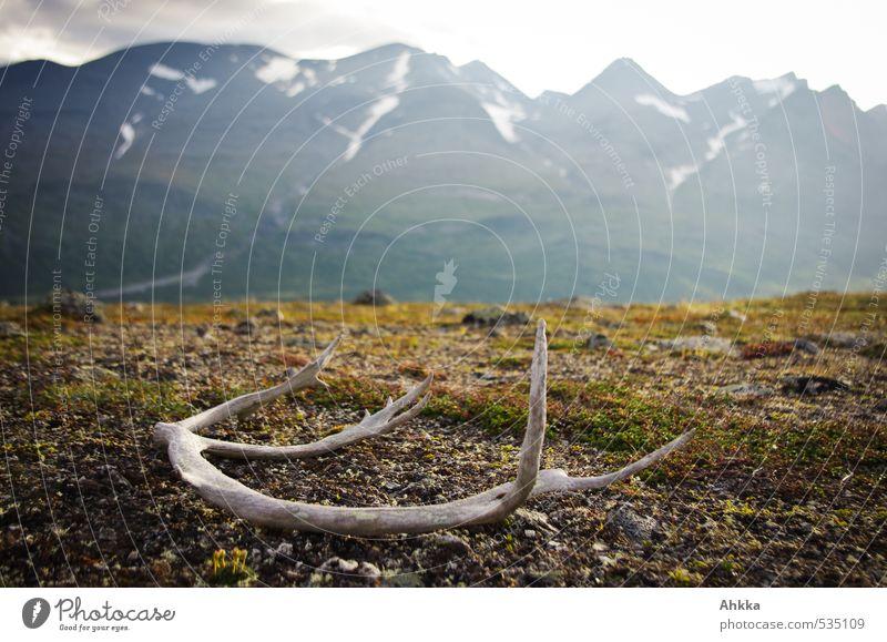 left over Natur Ferien & Urlaub & Reisen Einsamkeit Landschaft Berge u. Gebirge Gefühle Wildtier Lifestyle Klima Design wandern Perspektive Ausflug