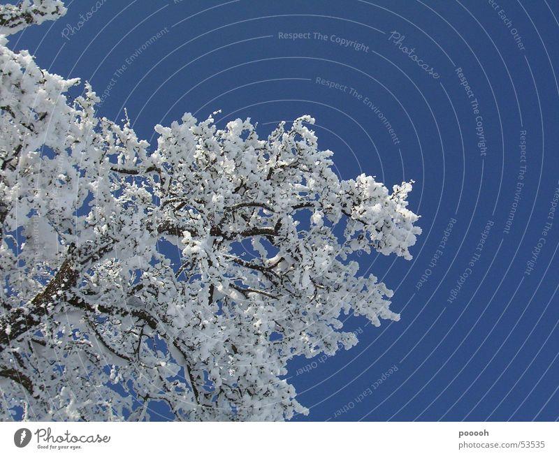 ein schöner wintertag ... Himmel weiß Baum Sonne blau Schnee Spaziergang Ast