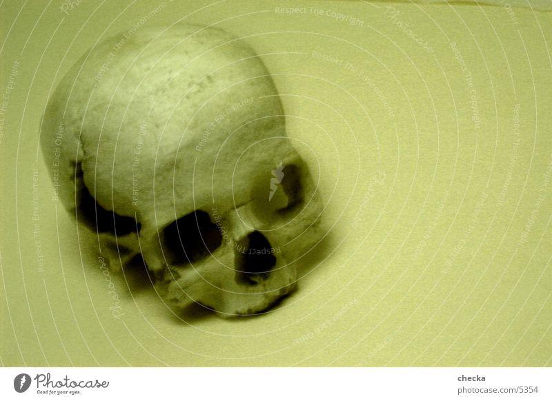 skull Skelett Dinge Schädel Tod Sepia