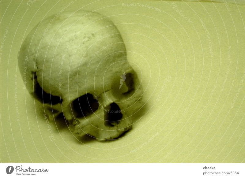 skull Tod Dinge Skelett Sepia Schädel