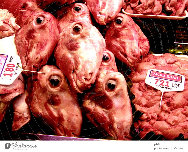 Fleischbeschau Schaf Ernährung Spanien Barcelona rot Schaufenster Metzger Auge Mund Lamm Markt Blut meat head eyes mouth sheep market spain red blood butcher