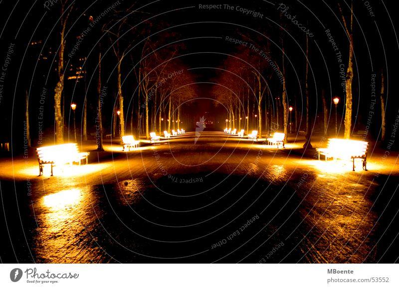 Sonnenbänke Park Allee Parkbank Sonnenbank Baum Licht