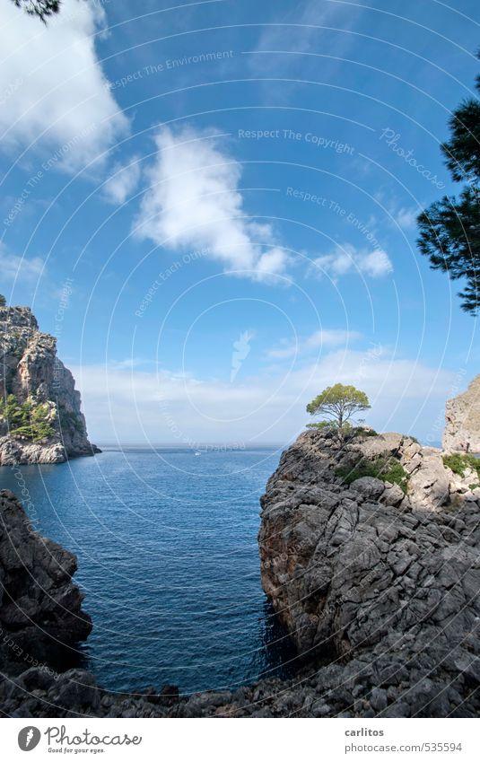 Mal wieder mehr Meer. Himmel Natur Ferien & Urlaub & Reisen blau grün weiß Wasser Baum Einsamkeit Landschaft Ferne Umwelt Berge u. Gebirge Küste grau