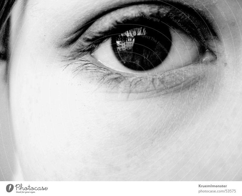 blick schwarz Auge Wimpern Pupille Lidschatten