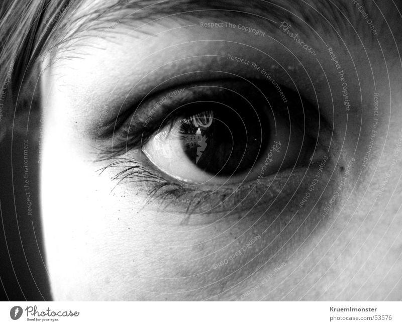 Blickfang Auge Wimpern Pupille Lidschatten