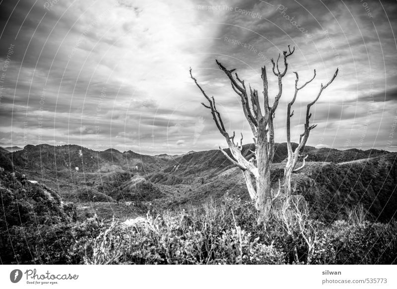 Pinnacle hike - HaDeäR Natur Landschaft Himmel Wolken Frühling Schönes Wetter Wind Pflanze Baum Gras Sträucher Moos Urwald Hügel ästhetisch Ferne einzigartig