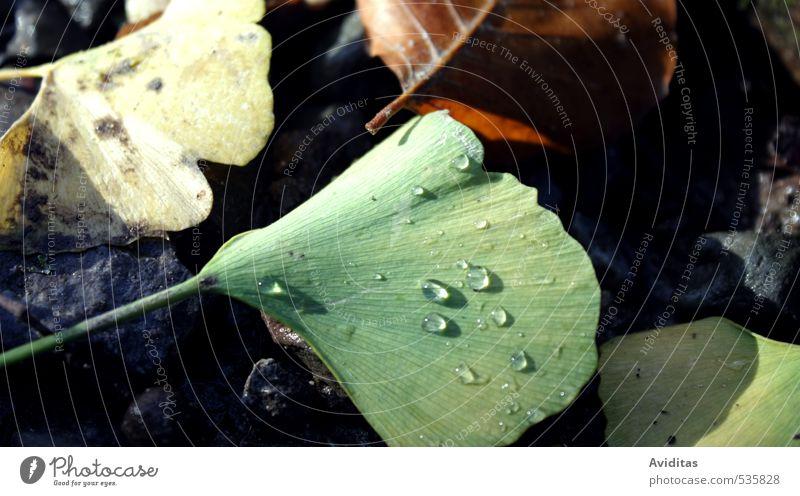 Perlen des Morgens Natur grün Pflanze Einsamkeit Blatt Wald gelb Umwelt Herbst grau braun Wetter Park Regen glänzend gold