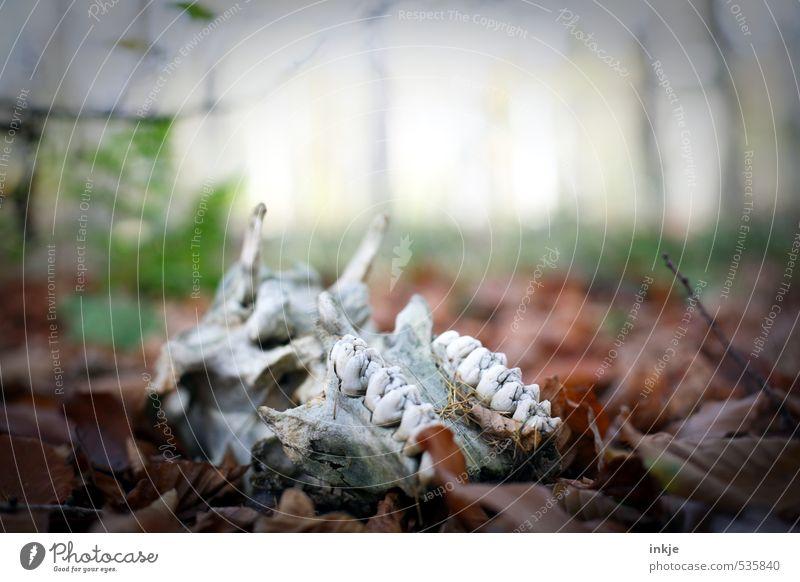 morbides Stillleben Natur Pflanze Blatt Tier Wald Umwelt Leben Gefühle Herbst Tod liegen Park Nebel Wildtier Vergänglichkeit Ewigkeit