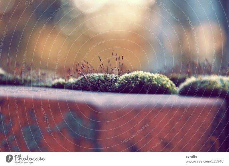 Moosberg Natur Herbst Wachstum Mauer Mauerpflanze Härchen Blendenfleck Hügel Moosteppich Sommer herbstlich zart weich Romantik Steinmauer Steinplatten bewachsen