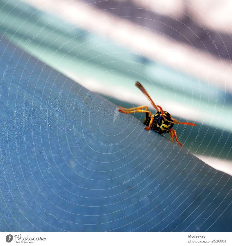 Angriff der Killerwespen Tier Wildtier Wespen 1 beobachten Blick sitzen warten Aggression bedrohlich natürlich blau braun gelb grau orange rosa schwarz weiß