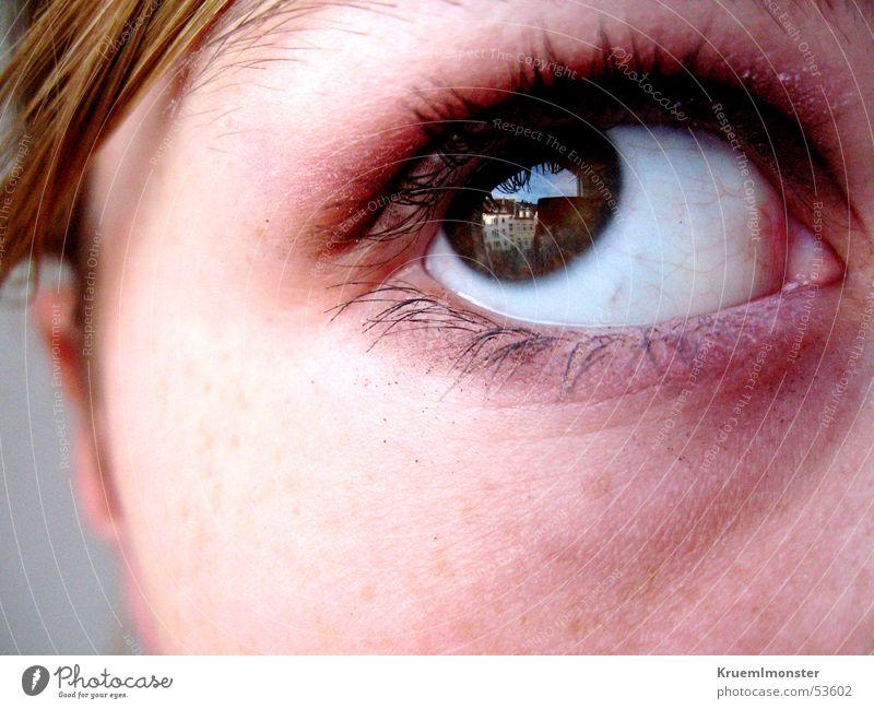 Aufblick Wimpern Lidschatten Pupille Auge