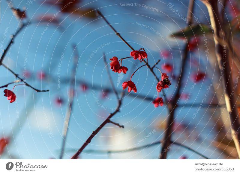 RotBlau Umwelt Natur Himmel Herbst Pflanze Baum Sträucher Blüte Garten Park Wald blau rot herbstlich Blühend Farbfoto Außenaufnahme Menschenleer Tag Licht