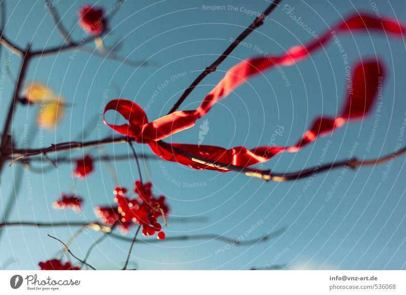 Schleife Himmel Natur Pflanze Baum rot Wald Umwelt Herbst Garten Park Wind Sträucher Schnur Geschenk Wolkenloser Himmel Beeren