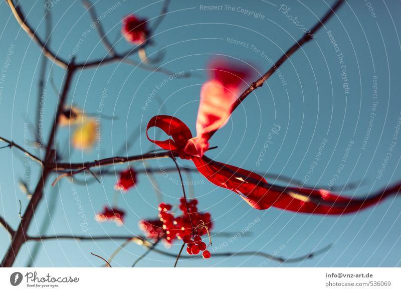 Schleife2 Himmel Natur Pflanze Baum rot Wald Umwelt Herbst Garten Park Wind Sträucher Schnur Geschenk Wolkenloser Himmel Beeren