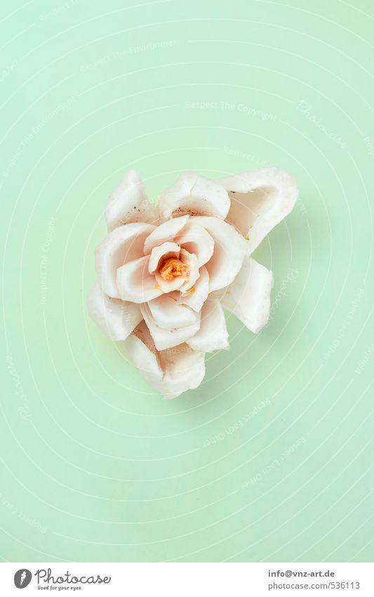 Modern_Vegetable_03 grün Farbe Pflanze Blume Kunst Design Ordnung modern verrückt Kochen & Garen & Backen Konzepte & Themen Küche Teile u. Stücke Gemüse türkis Teilung
