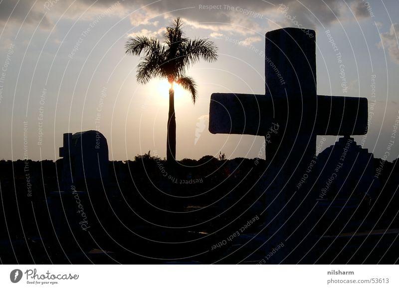 Friedhof auf Kuba Palme Gegenlicht Rücken Sonne