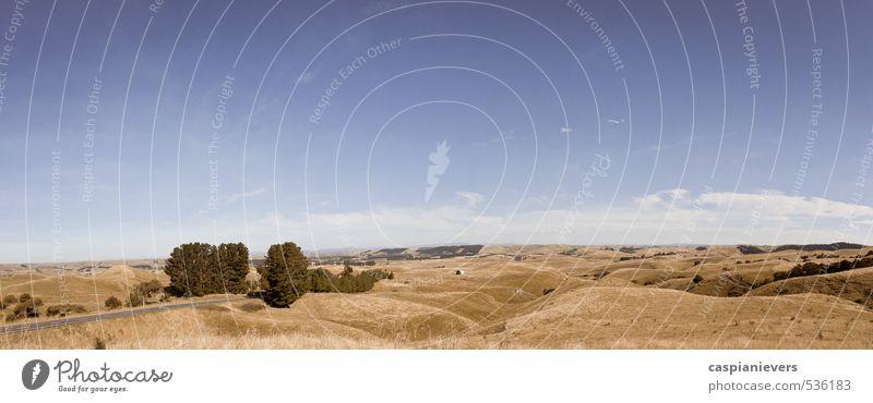 Rollende Felder von Neuseeland Umwelt Natur Landschaft Erde Himmel Wolkenloser Himmel Sommer Gras Hügel Napier blau braun orange regenarm heiß Grasland