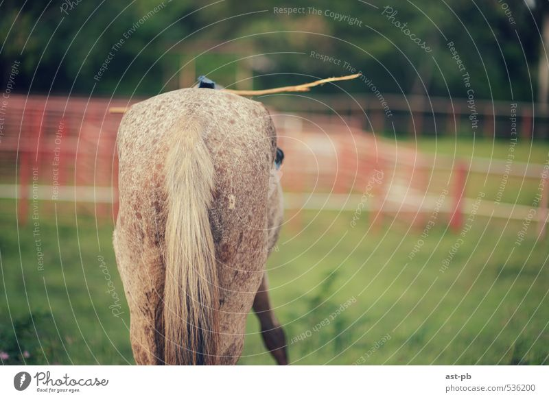 Pferderücken Natur Gras Kontrolle Stock einsatzbereit Farbfoto