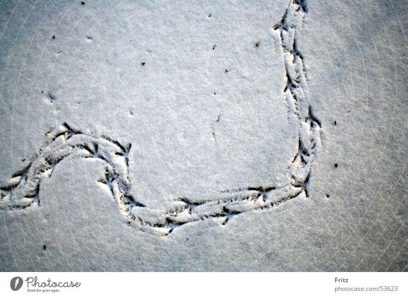 Auf Spurensuche Schnee Vogel Spuren Fußspur