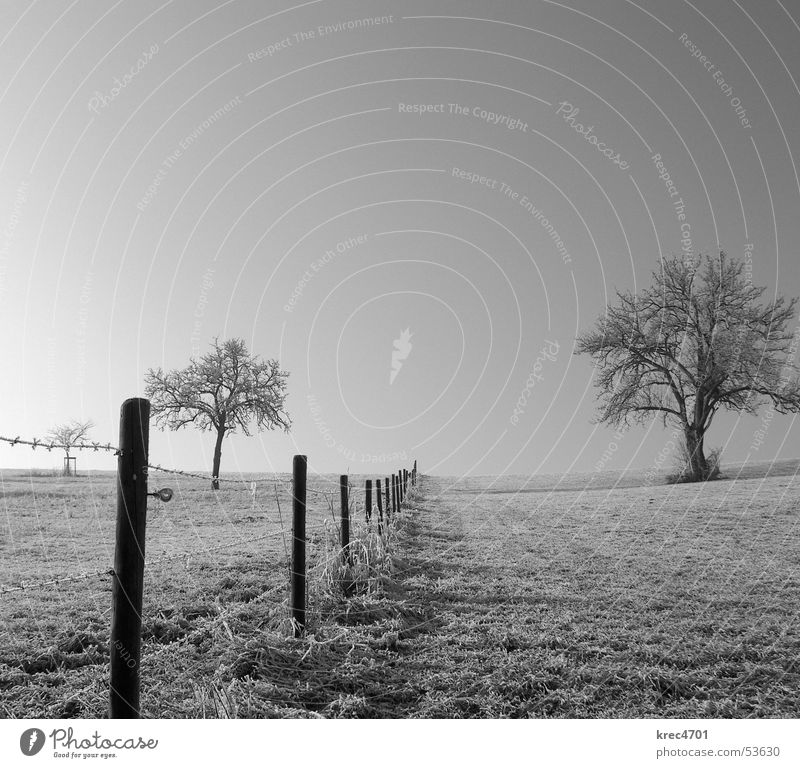 Getrennte (s/w) Himmel Baum Winter Wiese Weide Zaun Blauer Himmel Raureif Weidezaun
