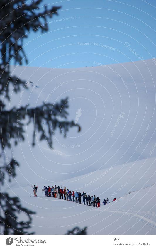 skitour Mensch Himmel weiß Sonne blau Ferien & Urlaub & Reisen Schnee Wege & Pfade Skifahren Ast Tanne Leiter Warteschlange Neuschnee