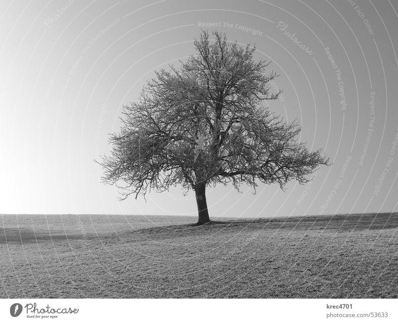 Einzelner Baum Himmel Einsamkeit Wiese Weide einzeln Blauer Himmel