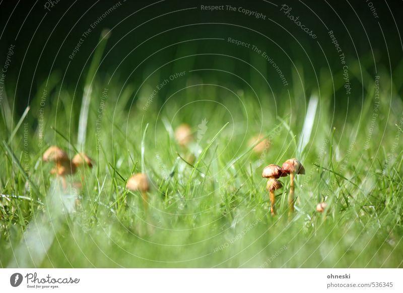Pilsken? Natur grün Wiese Herbst Gras Zusammenhalt Pilz Pilzhut
