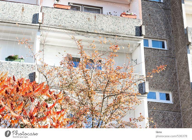Rückzugsgebiet ll Stadt Baum Haus Herbst Gebäude Häusliches Leben Hochhaus Vergänglichkeit Wandel & Veränderung Bauwerk Herbstlaub Umweltschutz herbstlich bevölkert