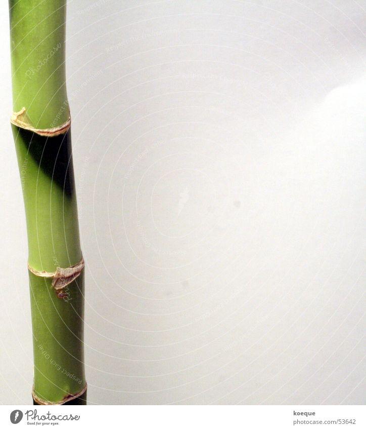 Unendlich?! Natur grün Pflanze Unendlichkeit Bambusrohr