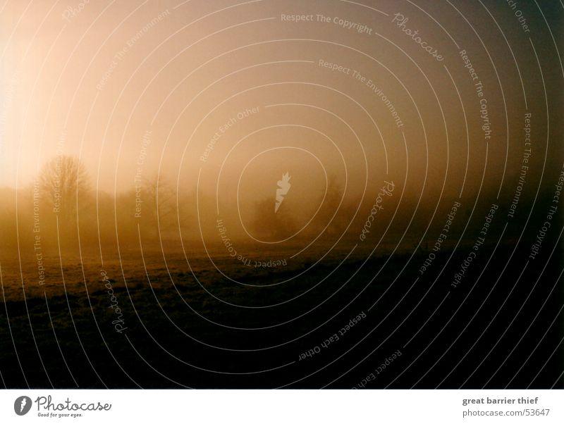 nebelmorgen Farbfoto mehrfarbig Außenaufnahme Menschenleer Morgen Abend Dämmerung Licht Schatten Kontrast Unschärfe Sonne Winter Umwelt Landschaft Sommer Nebel