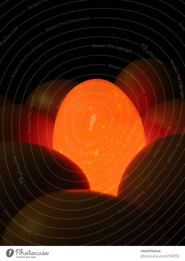 Glühei I Licht rot glühen Hühnerei Ei Lampe egg