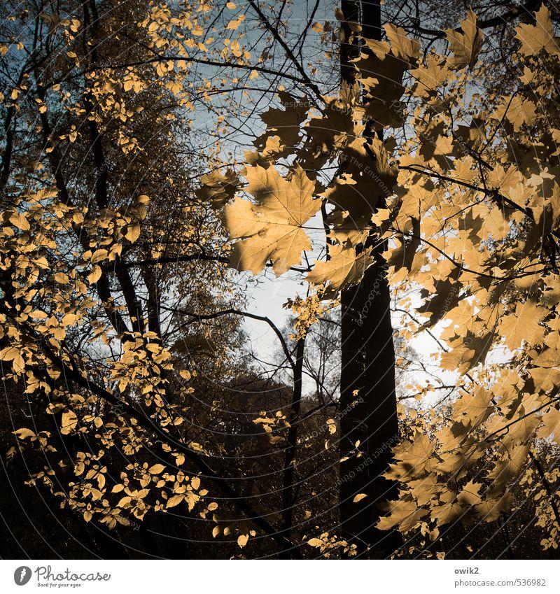 Wetterleuchten Umwelt Natur Landschaft Pflanze Wolkenloser Himmel Herbst Klima Schönes Wetter Baum Blatt Ahorn Ahornblatt Zweige u. Äste Holz Unterholz