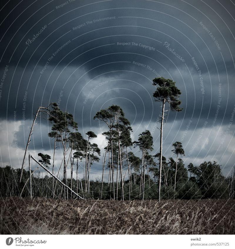 Windpark Natur Pflanze Baum Landschaft Wolken Ferne Umwelt Herbst Bewegung Zusammensein Horizont Idylle stehen Sträucher groß
